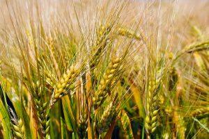 alimentos-desintoxicantes-cereales-semillas